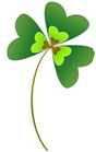 shamrock