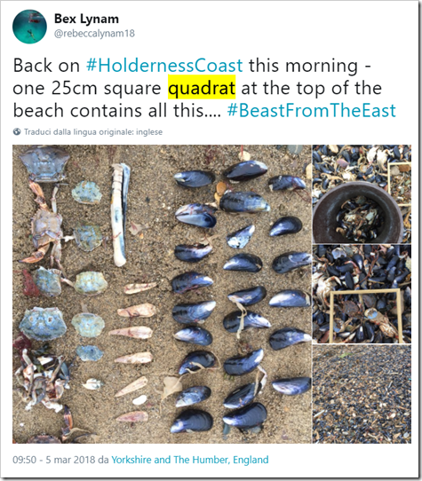 tweet di Bex Lynam: Back on #HoldernessCoast this morning - one 25cm square quadrat at the top of the beach contains all this.... #BeastFromTheEast