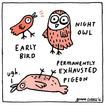early bird - night owl - permanently exhausted pigeon