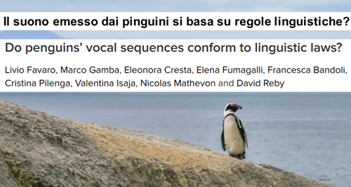 Do penguins' vocal sequences conform to linguistic laws? - Study by Livio Favaro, Marco Gamba, Eleonora Cresta, Elena Fumagalli, Francesca Bandoli, Cristina Pilenga, Valentina Isaja, Nicolas Mathevon and David Reby