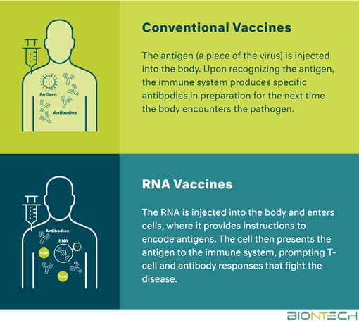 Conventional Vaccines: The antigen (a piece of the virus) is injected into the body. Upon recognizing the antigen, the immune system produces specific antibodies in preparation for the next time the body encounters the pathogen.