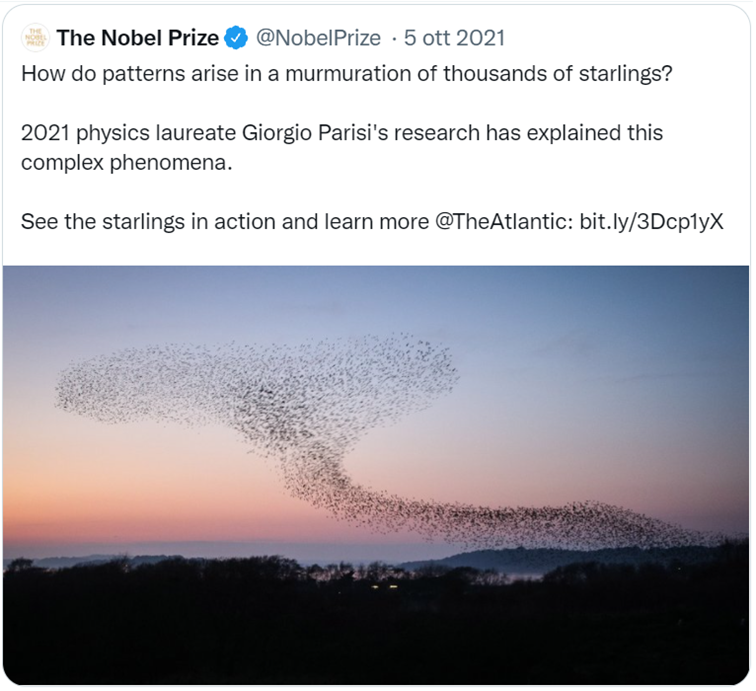 """tweet di @NobelPrize: """"How do patterns arise in a murmuration of thousands of starlings? 2021 physics laureate Giorgio Parisi's research has explained this complex phenomena. See the starlings in action and learn more"""""""